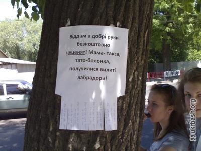 Івано-Франківськ ))